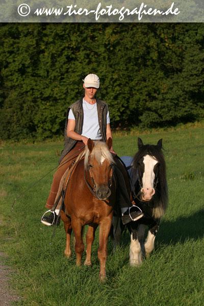 Ausritt mit Haflinger Moritz und Tinker Max
