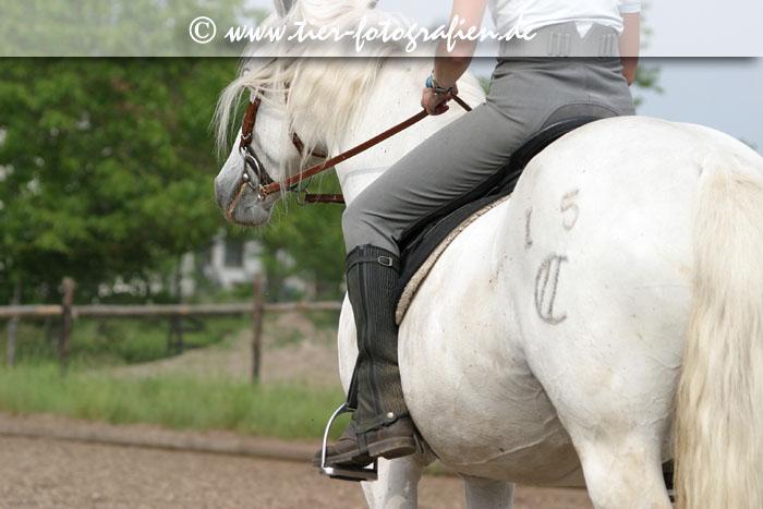 Camargue Pferd mit Reiter
