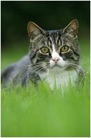 Katzen Fotoshooting