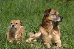 Mischlinge aus dem Tierheim Ludwigsburg