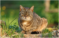 Katzenfotos / Stallkatze Tigerle