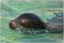 Zoo Besuch Seehund